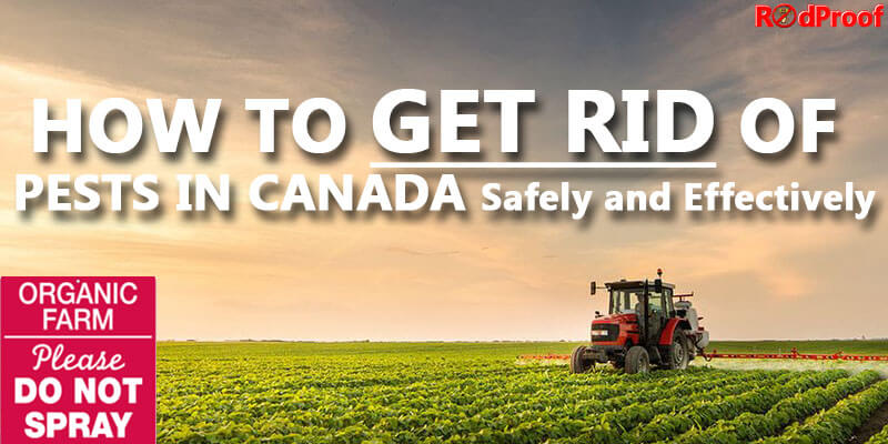 Get-Rid-of-Pests-in-Canada-main_image